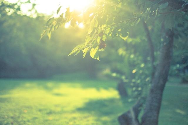 潜在意識 引き寄せ 瞑想 感想 体験